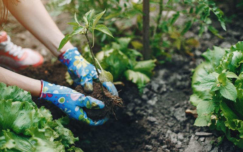 Mata na płot - Wiosna w ogrodzie